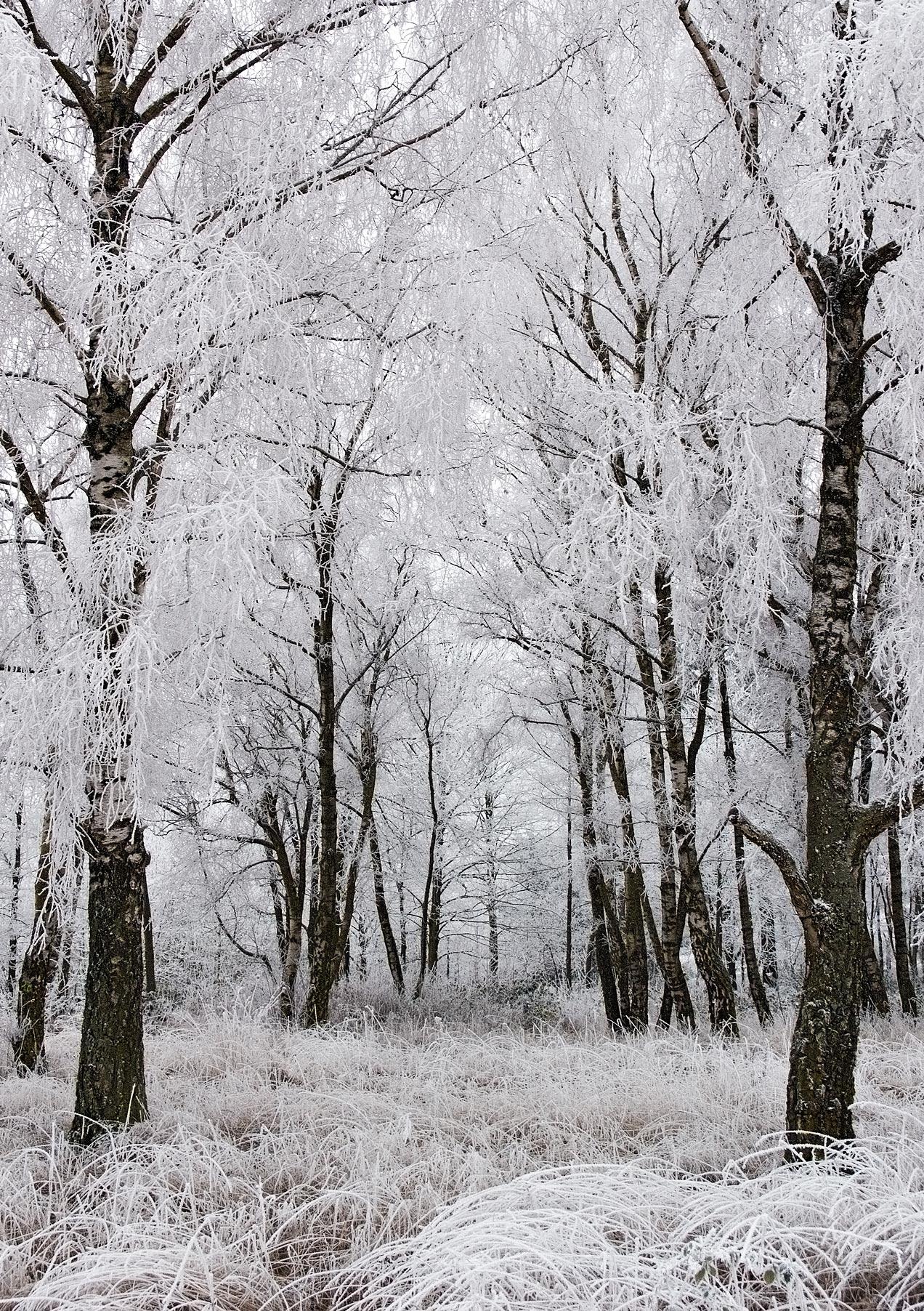 Landschaftsbild Wald im Raureif