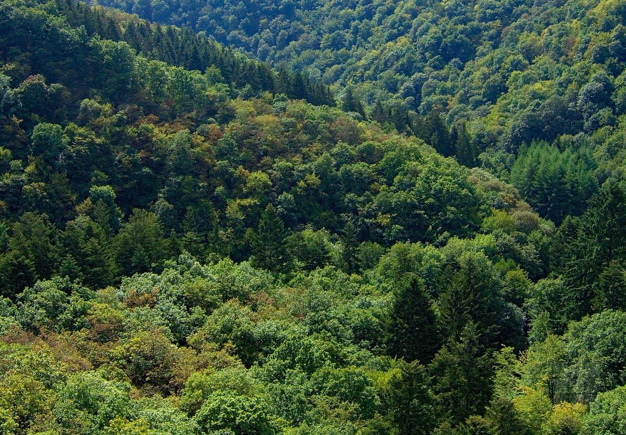 Landschaftsgemälde Eifelgrün