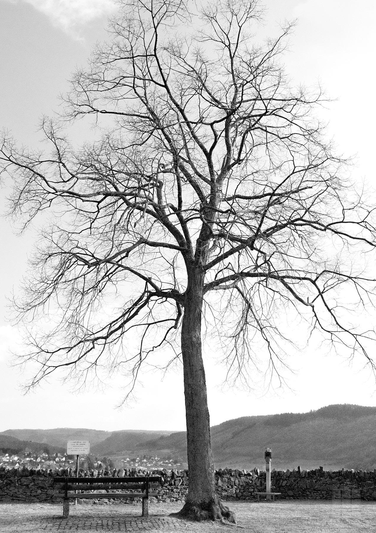 Naturfoto Saarburg