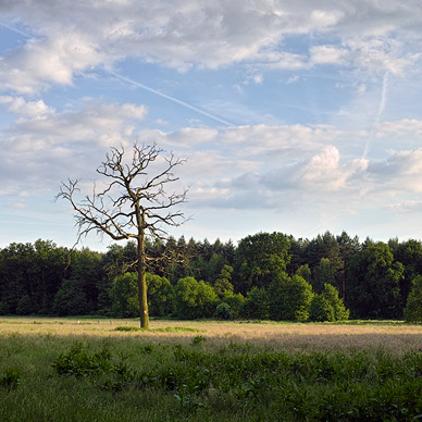 Wiese Baum Wald Himmel