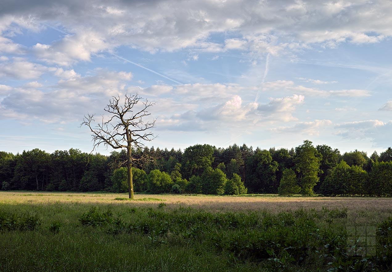 Wiese Baum Wald Himmel - Arbeitsbeispiel Landschaftsfotografie